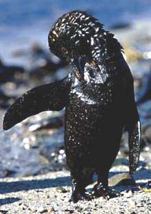 Pingvin u nafti